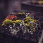 Compost miniature par Alvin Engler